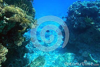珊瑚红色礁石海运