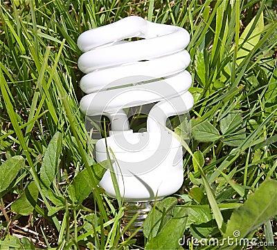 生态学上友好的电灯泡