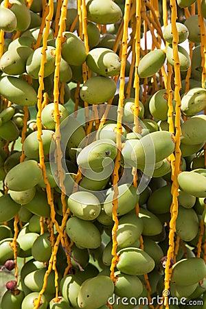 生长结构树的日期