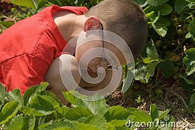 男孩挑选草莓