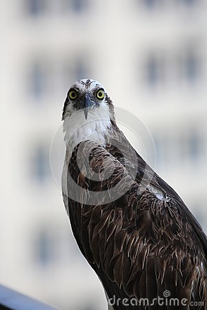 白鹭的羽毛