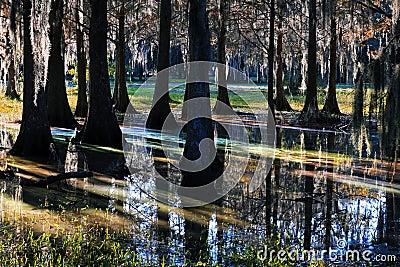 轻的反射在沼泽地