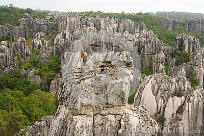 石林石头森林国家公园在昆明.云南,中国.图片