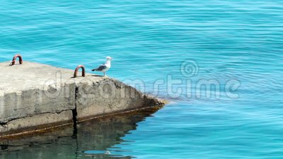 码头上的海鸥 影视素材