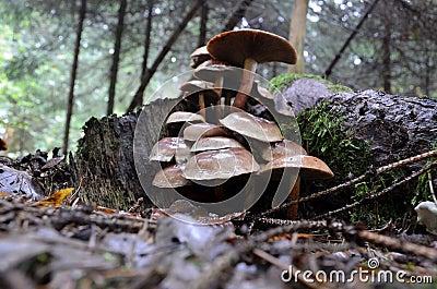 砖一束蘑菇