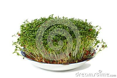 碎米荠属植物