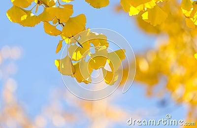 秋天北京风景图片