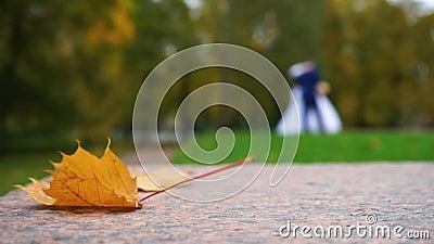 秋天图象叶子范围xxxl 影视素材