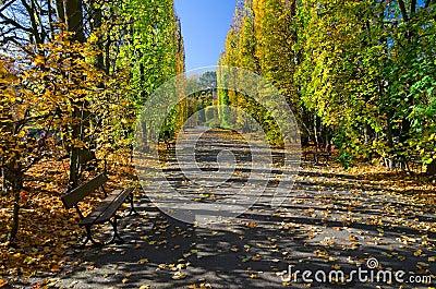 秋天在公园
