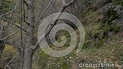 秋天在森林里 股票录像