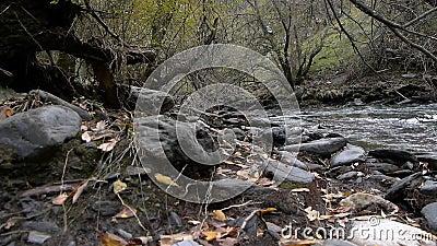 秋天在森林里 股票视频