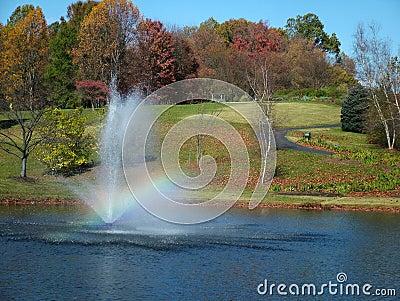 秋天森林彩虹