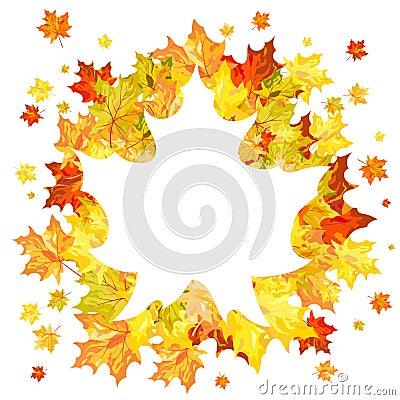 秋天槭树叶子