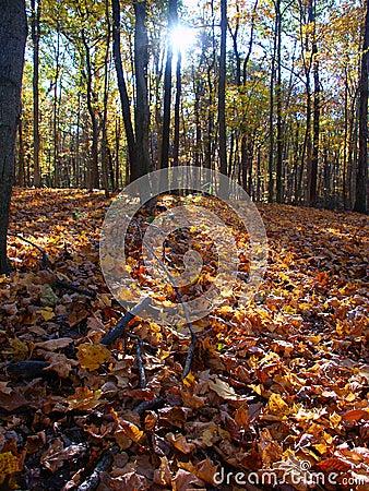 秋天风景在中央伊利诺伊