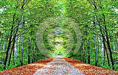秋季的胡同