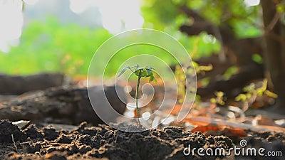 种植地球上的妇女的手种子研了并且浇灌了与自然环境噪声 影视素材