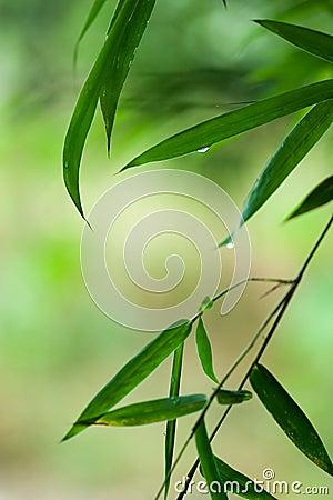 download 竹子丢弃绿色叶子水 库存照片.