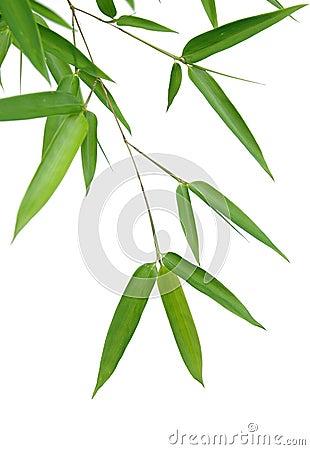 梦见竹子叶