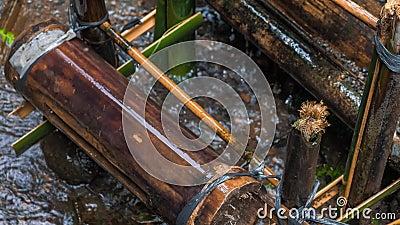 竹水灌溉,带来水从小河到种植园 交付水的竹子特写镜头 巴厘岛 聚会所 股票视频