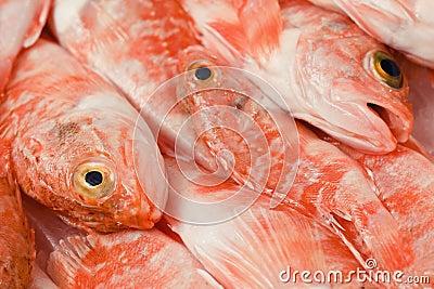 红大马哈鱼