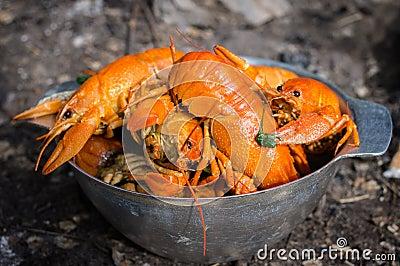 红色煮沸的小龙虾