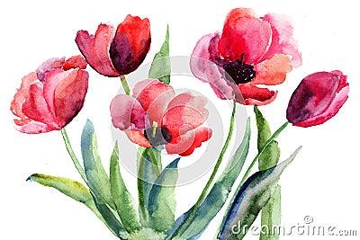 红色郁金香花