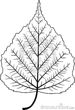 结构树叶子图片