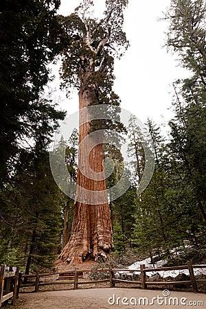综合财政补贴树丛