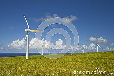 绿色生态,替代风能源