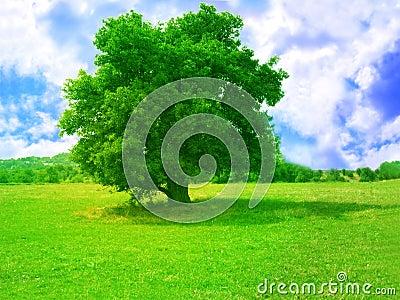 绿色结构树