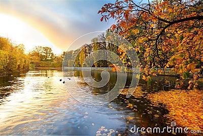 美丽的公园池塘在日落的秋天