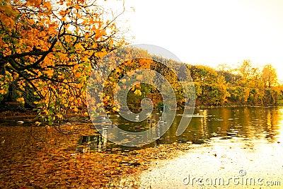美丽的公园池塘在秋天