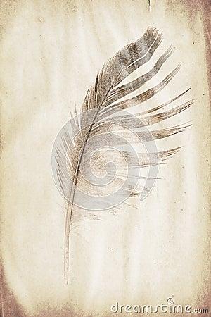 羽毛水印 库存照片 - 图片: 66105928