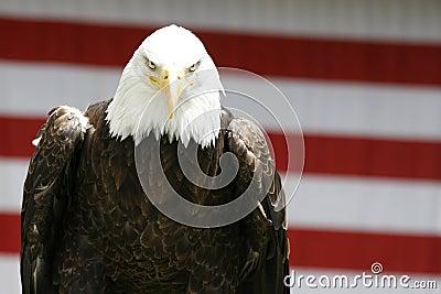 老鹰偷偷靠近