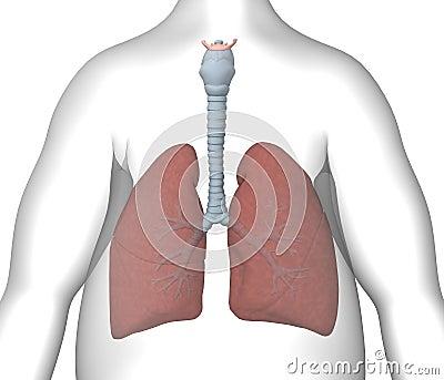 肺����y�9����_肺