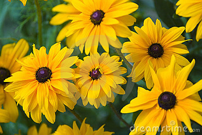 背景开花黄色