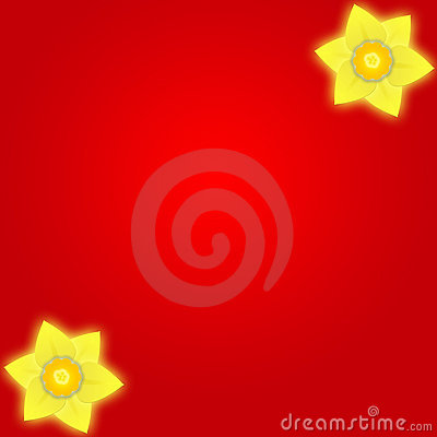 背景黄水仙红色