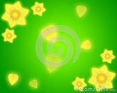 背景黄水仙绿色