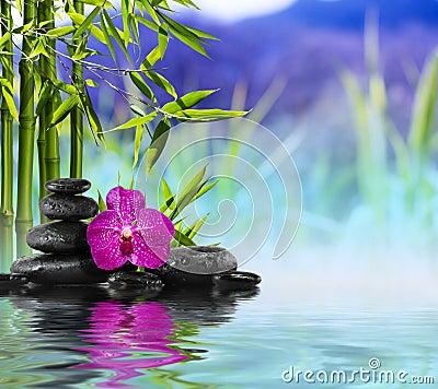 紫色兰花,石头和竹子在水