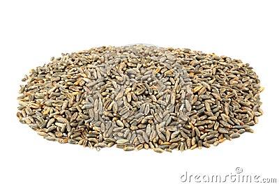 绿色燕麦五谷