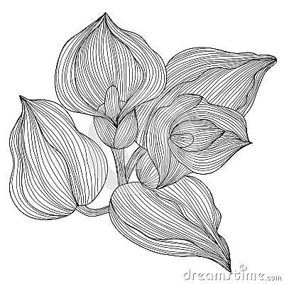 花卉装饰图片