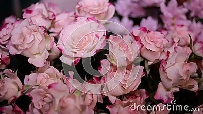 花束桃红色玫瑰