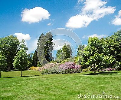 草坪结构树