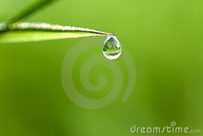 草waterdrop