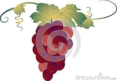 葡萄树图片