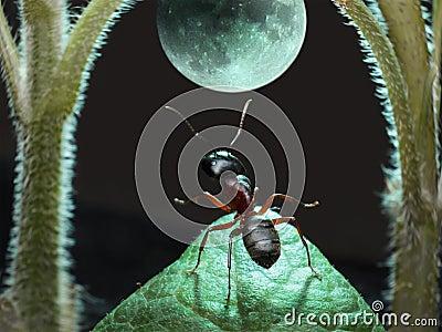 蚂蚁月球行走