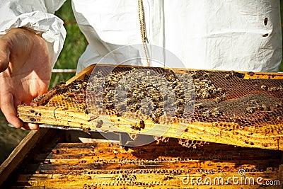 壁纸动物蜥含义400_267歌词蜜蜂万玲琳蜥蜴图片