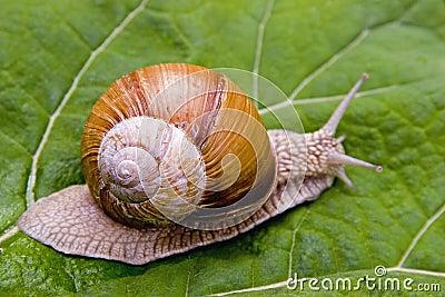 蜗牛蝴蝶梦中英图片