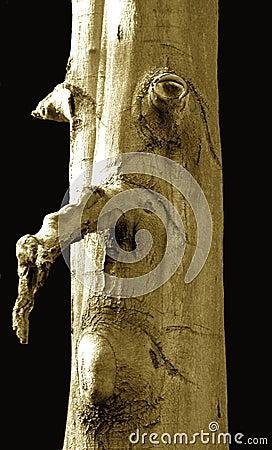 表面人结构树
