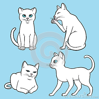 被设置的逗人喜爱的白色猫